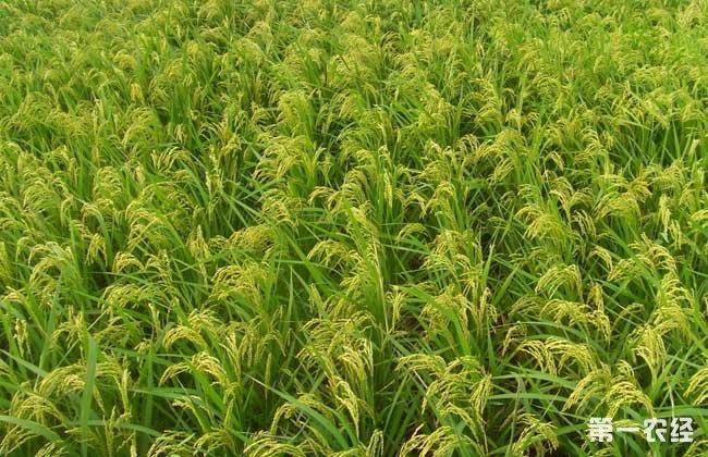 农业补贴项目