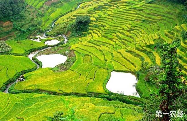 农村土地改革新政策