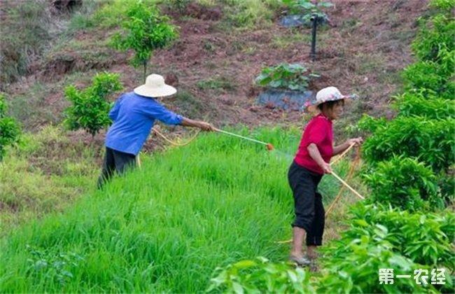 植物生长调节剂 使用注意事项