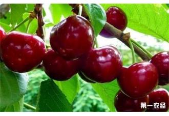 植物生长调节剂使用注意事项