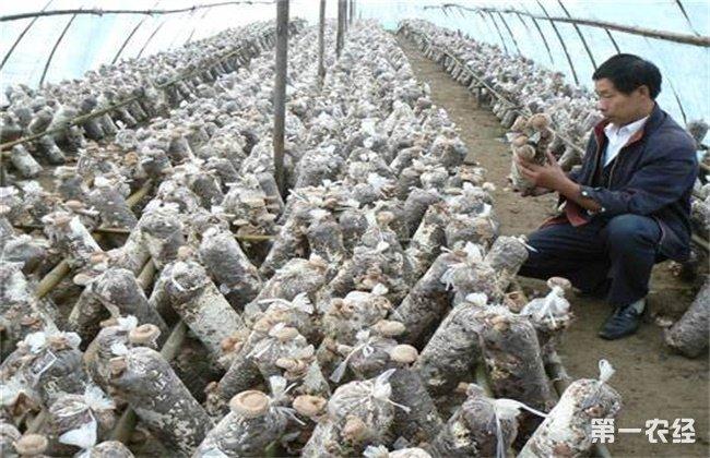 平菇冬季栽培管理要点