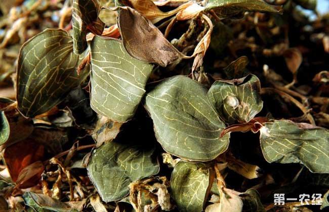 金线莲的种植成本和利润