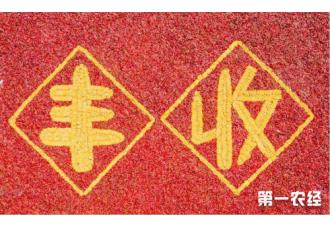 共庆中国农民丰收节,极飞为全国农民交上一份满意答卷