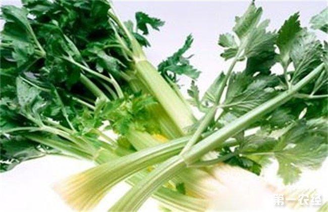 芹菜叶柄粗纤维增多原因及防止措施