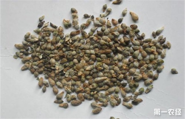 药材种子 播种前 处理方法