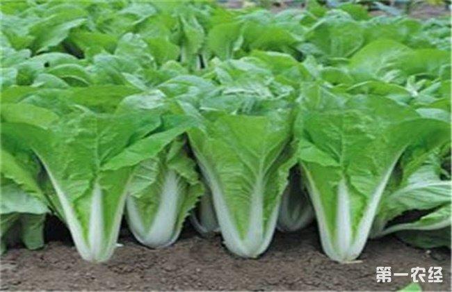 霜降前后种什么蔬菜好