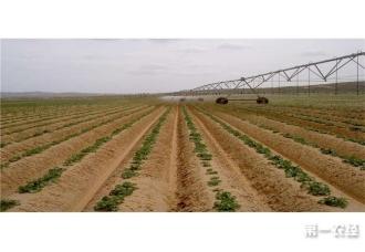 <b>春季种植土豆高产栽培技术</b>