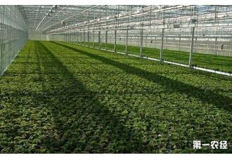 如何正确使用大棚种植蔬菜