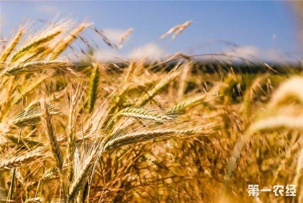 蜀九五生态门户网:轻松实现生态农产品生产端和消费端双获利