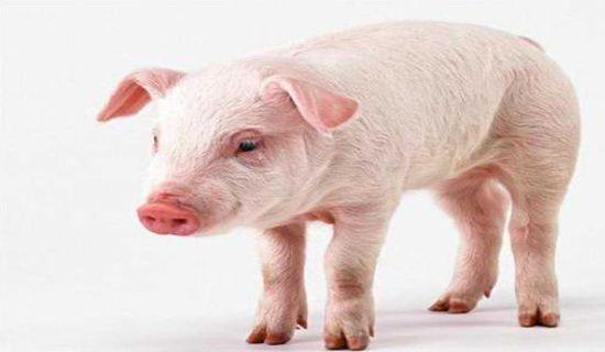<b>2021年6月25日生猪价格行情走势,未来生猪行情走势预测</b>