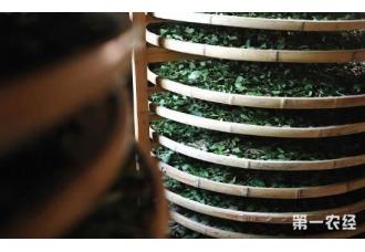 什么是茶叶发酵?