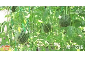 【走进乡村看小康】海南陵水:科技助力 吹着空调来种田