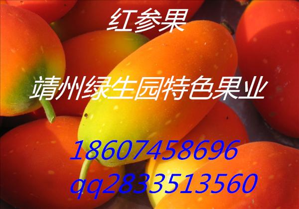 高端水果红参果种子 绿生园种植基地批发