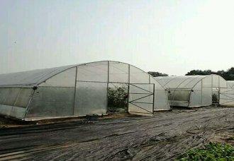 温室大棚——薄膜拱棚