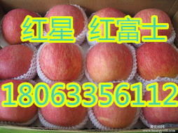 山东红富士苹果批发价格便宜