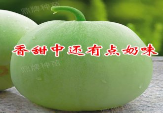 青皮甜瓜种子